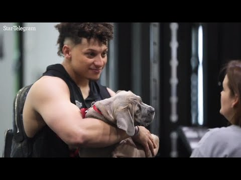 Chiefs quarterback Patrick Mahomes brings his puppy to offseason training